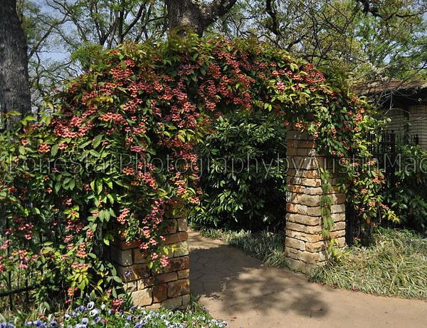 Садовые арки своими руками: как сделать арку в саду для. - Houzz