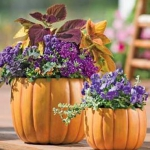 autumn-flowers-ideas-harvest2.jpg