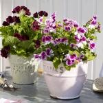 balcony-flowers-ideas1-10.jpg