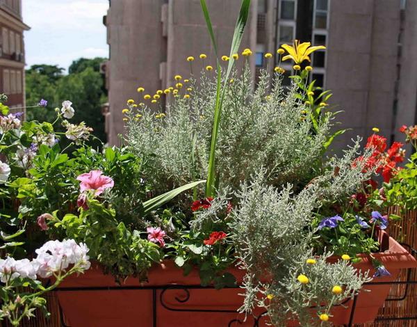 Цветы на балконе: оригинальные контейнеры и миксы из растени.