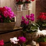 balcony-flowers-ideas2-2.jpg