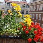 balcony-flowers-ideas2-4.jpg