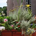 balcony-flowers-ideas2-8.jpg