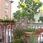 balcony-flowers-ideas5-1.jpg
