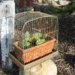 bird-cage-decoration3-12.jpg