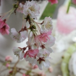 blooming-branches-spring-table-setting1-5.jpg