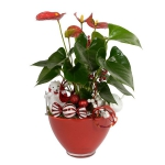 blooming-plants-new-year-decoration1-1