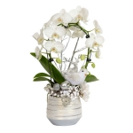 blooming-plants-new-year-decoration4-1