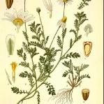 botanical-print-diy-pattern1-3.jpg