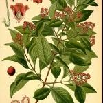 botanical-print-diy-pattern3-1.jpg