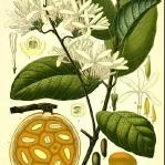 botanical-print-diy-pattern5-3.jpg