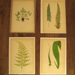 botanical-print-ideas13.jpg