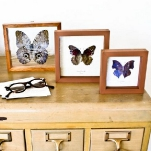 butterfly-interior-ideas1-5.jpg