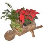 christmas-poinsettia-combo11.jpg
