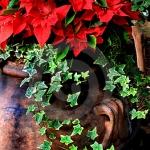 christmas-poinsettia-combo8.jpg