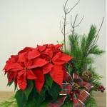 christmas-poinsettia-combo9.jpg