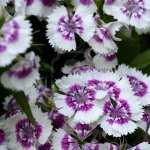 combo-frosted-purple-and-white-flowers6.jpg