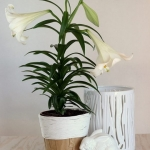diy-5-flower-pots-decor-from-rope4-4
