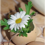 easter-chickens-table-setting-flowers8.jpg