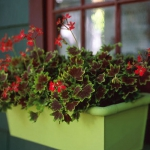 flowers-container-ideas-by-marta9.jpg