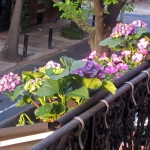 flowers-on-balcony-railing4-1.jpg