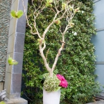 branches-party-decorating-eco8.jpg