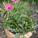 garden-flowers-mix-in-container2-1.jpg