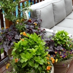 garden-flowers-mix-in-container3-1.jpg