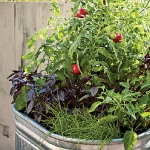 garden-flowers-mix-in-container3-3.jpg