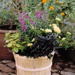 garden-flowers-mix-in-container3-6.jpg