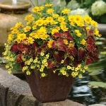 garden-flowers-mix-in-container4-3.jpg
