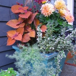 garden-flowers-mix-in-container5-1.jpg