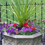 garden-flowers-mix-in-container6-1.jpg