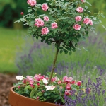 garden-flowers-mix-in-container7-2.jpg