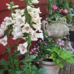 garden-flowers-mix-in-container8-3.jpg