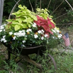 garden-flowers-mix-in-container9-1.jpg