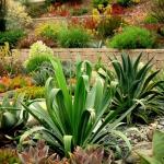 garden-inspiration-by-gabriel-succulent10.jpg