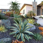 garden-inspiration-by-gabriel-succulent6.jpg