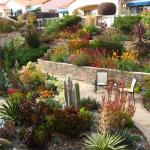 garden-inspiration-by-gabriel-succulent8.jpg