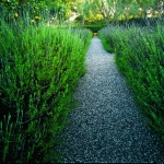 garden-path-ideas55.jpg