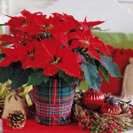 home-flowers-in-new-year-decorating1-4.jpg