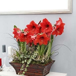 home-flowers-in-new-year-decorating3-3.jpg
