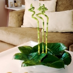 home-plants-creative-ideas1-1.jpg