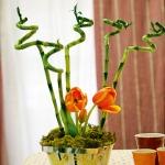 home-plants-creative-ideas1-4.jpg