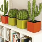 home-plants-creative-ideas2-5.jpg