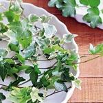 home-plants-creative-ideas3-3.jpg