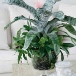 home-plants-creative-ideas4-1.jpg