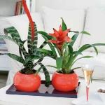home-plants-creative-ideas4-2.jpg