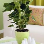 home-plants-creative-ideas4-3.jpg
