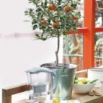 home-plants-creative-ideas4-4.jpg